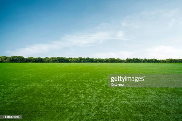 grass background against sky - sports field stock pictures, royalty-free photos & images