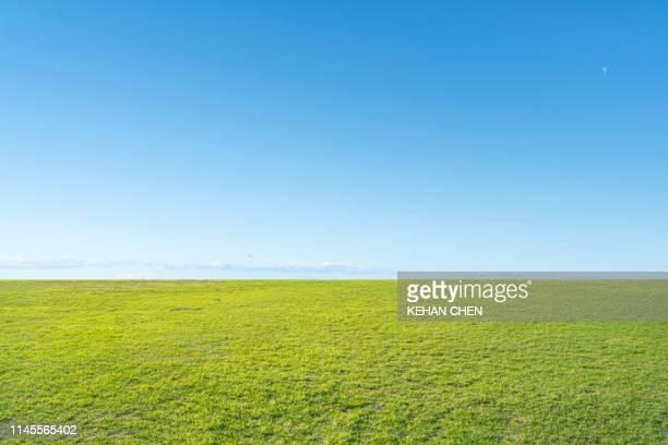 grass background and skyline - 芝草 ストックフォトと画像