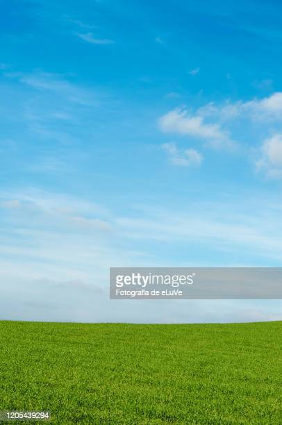 grass background and skyline under blue sky - blue sky stock pictures, royalty-free photos & images
