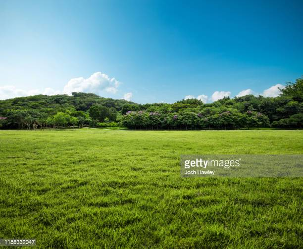 grass  background - grass picture stock pictures, royalty-free photos & images