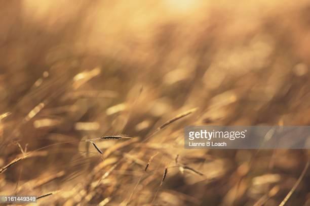 grass background - lianne loach - fotografias e filmes do acervo