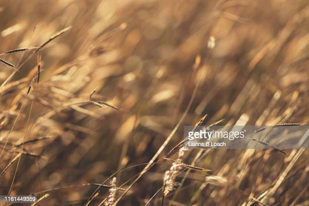 grass background - lianne loach stock pictures, royalty-free photos & images