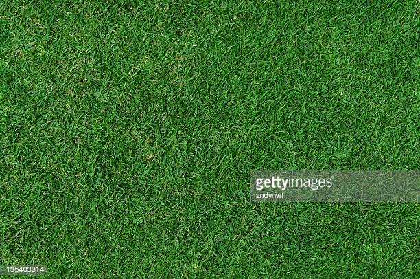 Grass Background (Seamless)
