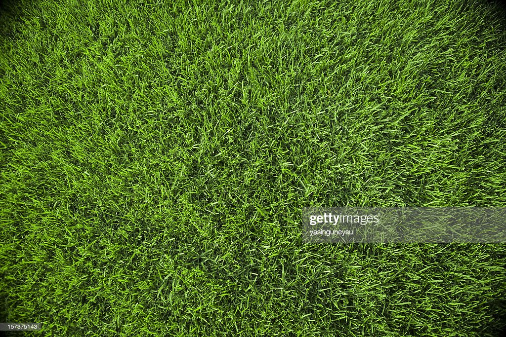Grass Background : Stock Photo