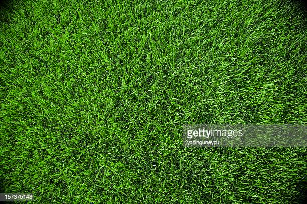 grass background - grass stock pictures, royalty-free photos & images