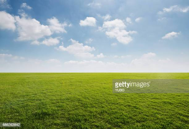 grass background - horizon over land stock photos and pictures