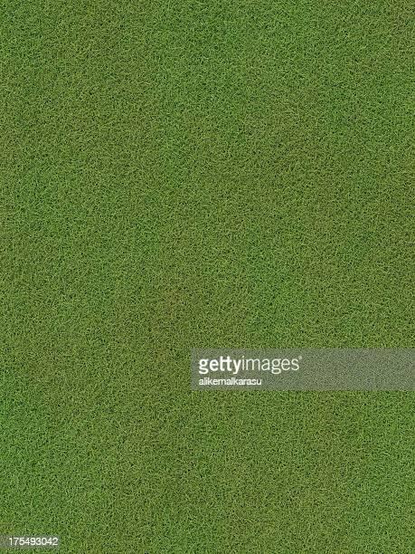 Fond herbe XXXL (31.6 MP)