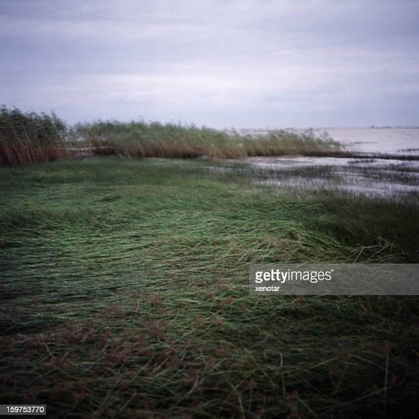 grass bank of Yangtze River at Jiangshu province