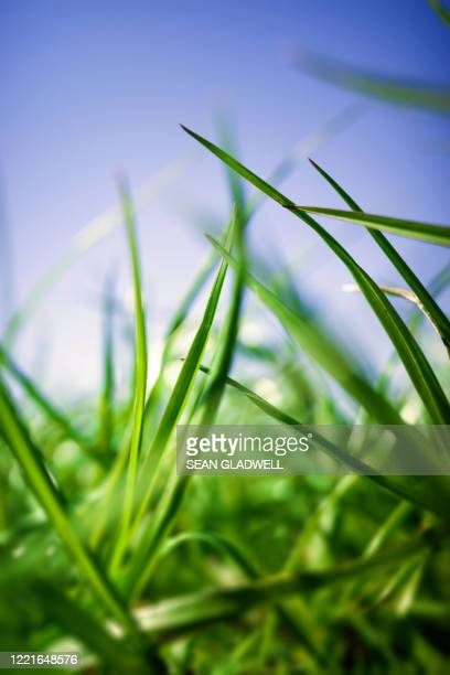 grass blades - lush stock pictures, royalty-free photos & images