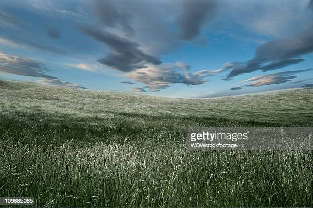 grass blowing in wind - blenheim new zealand stock pictures, royalty-free photos & images