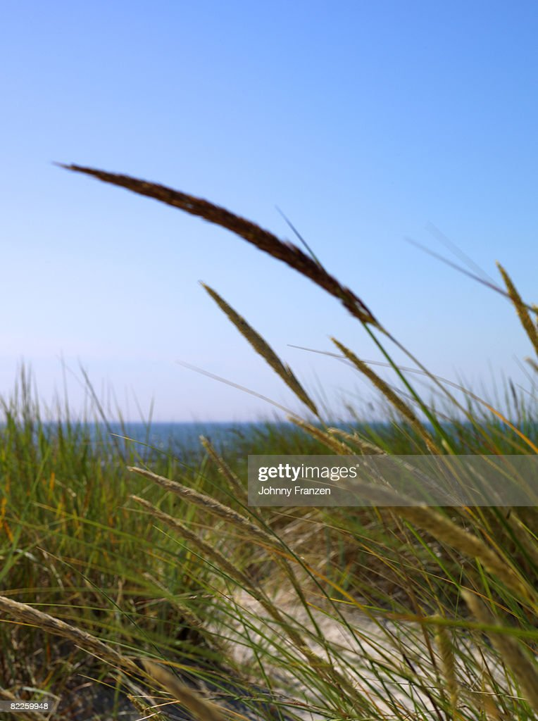 Grass by the sea Sweden. : Stock Photo