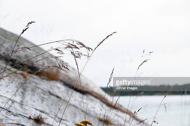 grass, close-up - arquipélago - fotografias e filmes do acervo
