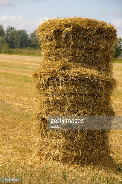 grass collected in a haystack - lutavia stock pictures, royalty-free photos & images