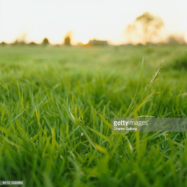 Grass Covered Field at Sunrise