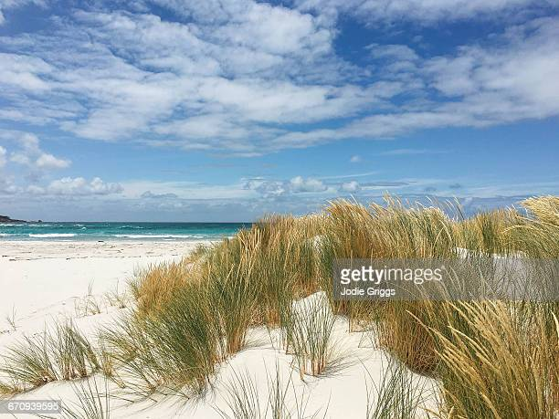 Grass covered sand dune at the beach