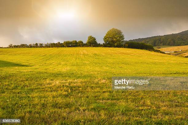 Grass field at sunrise