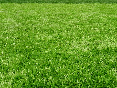 Grass field for football sport 936930012