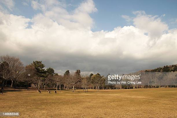 Grass field in nara park