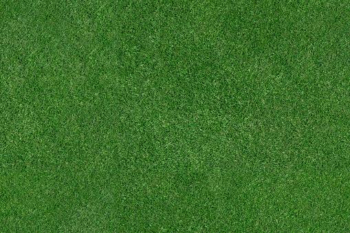 Grass Field 474672896