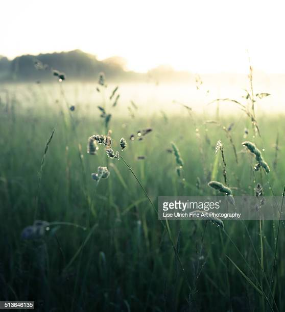 grass field - lise ulrich stock pictures, royalty-free photos & images