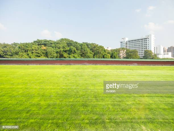 Grass field under blue sky with tree and building in the background