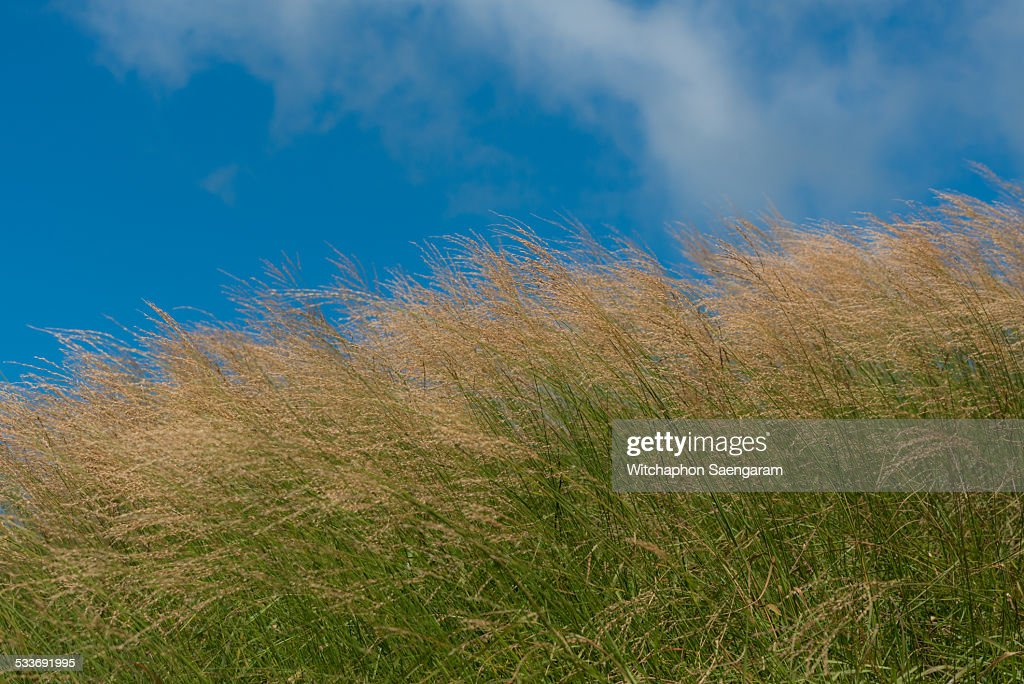 Grass field with blue sky : Foto stock
