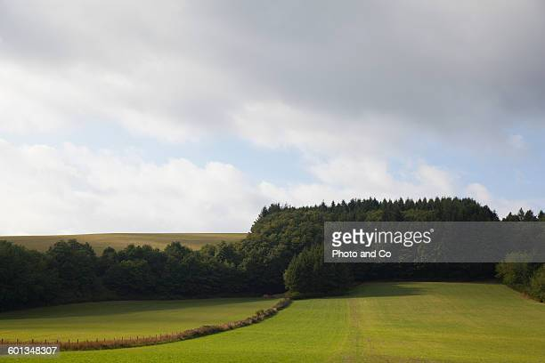 Grass fields, pine forest and gray sky