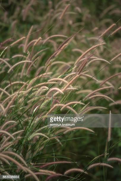 Grass flower field