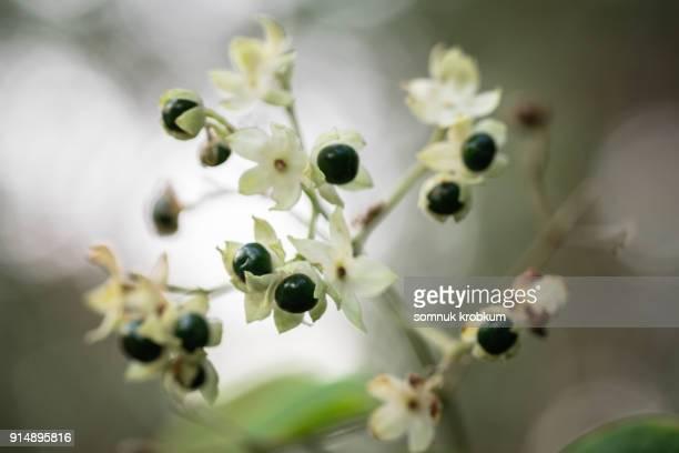 Grass flower in forest