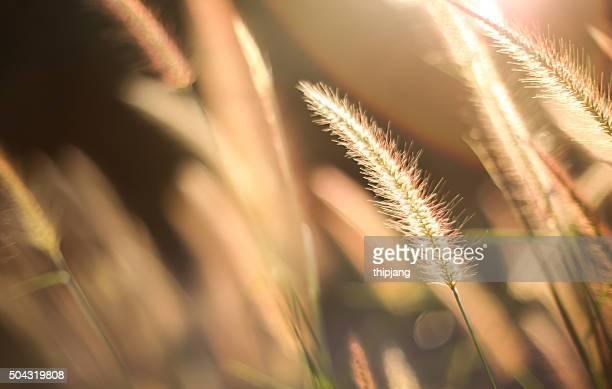 grass flower - april stockfoto's en -beelden