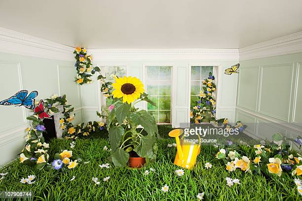 Grass, flowers and butterflies in tiny room