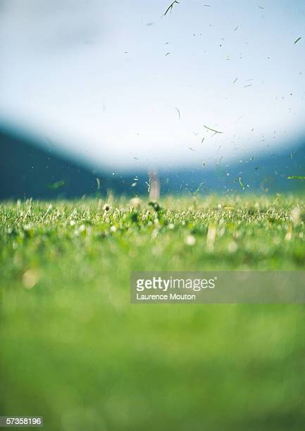 grass flying in air after tee-off - blade of grass stock pictures, royalty-free photos & images
