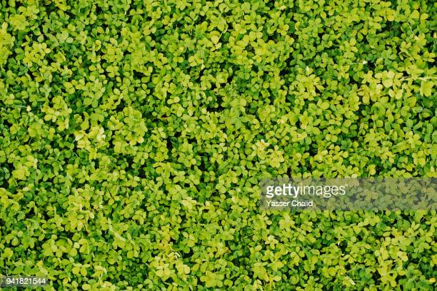grass from above - bush stock pictures, royalty-free photos & images