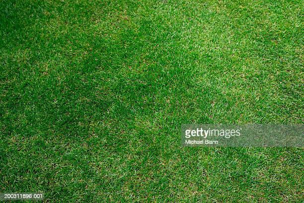 Grass, full frame