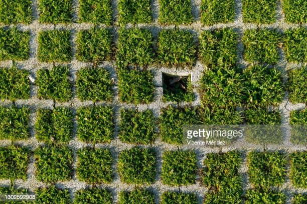 grass grid - vicente méndez fotografías e imágenes de stock