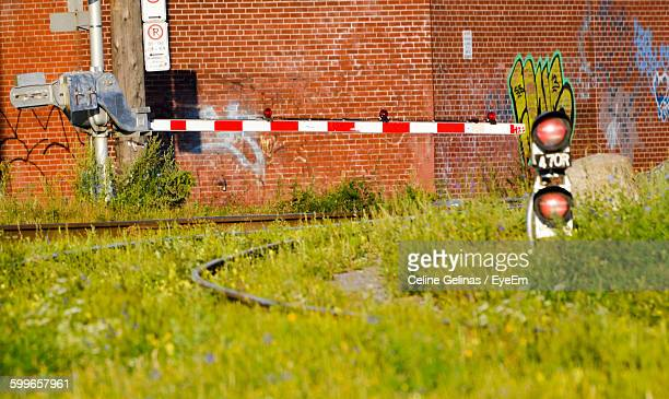 Grass Growing Against Brick Wall With Graffiti