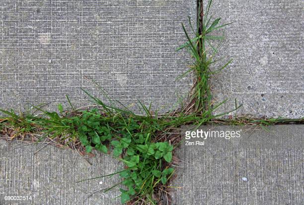 Grass growing along joints of interlocking pavement