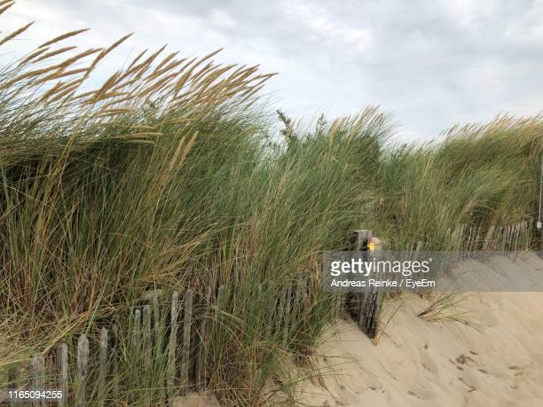grass growing at beach against sky - middelburg netherlands stock pictures, royalty-free photos & images