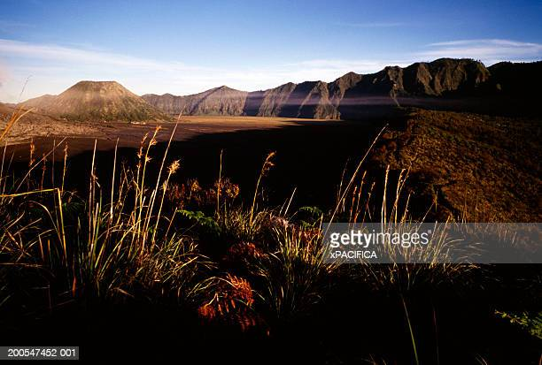 Grass growing at Mount Bromo, Java, Indonesia