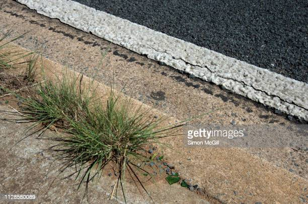 grass growing between the sidewalk and the kerb of a road - bad condition stock pictures, royalty-free photos & images