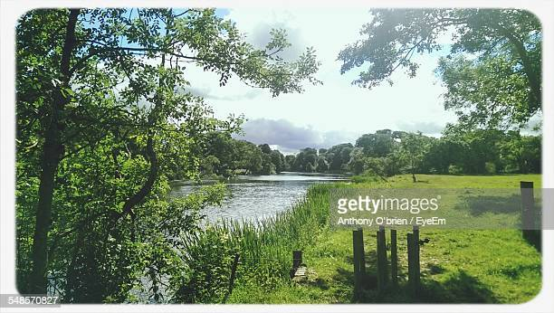 grass growing by riverbank against cloudy sky - fermoy stock photos and pictures