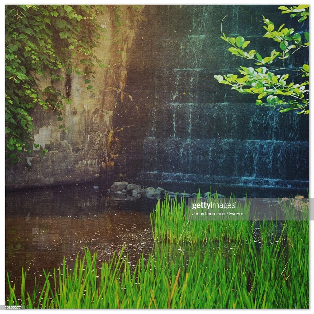 Grass Growing By Waterfall : Foto de stock