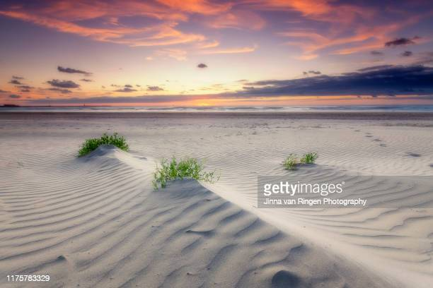 grass growing from the sand at the beach at sunset - noord europa stockfoto's en -beelden
