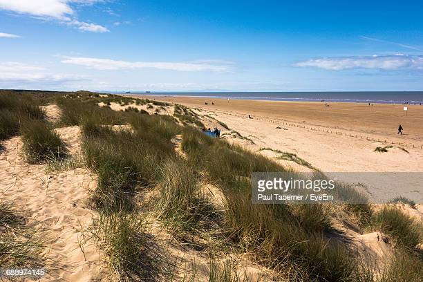 grass growing in sand at beach against blue sky - イングランド サウスポート ストックフォトと画像