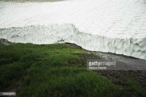 Grass growing next to the Mutnovsky Glacier, Kamchatka, Petropavlovsk Kamchatsky, Russia