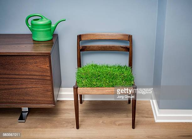 Grass growing on a chair