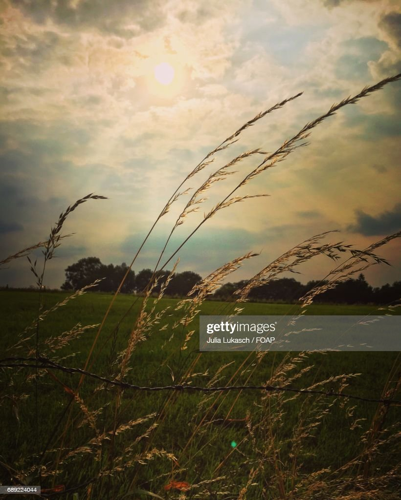 Grass growing on field : Stock Photo
