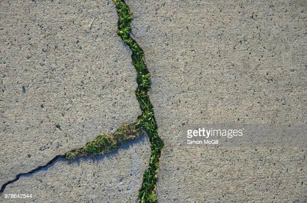 grass growing through cracks in a concrete footpath - 自生 ストックフォトと画像
