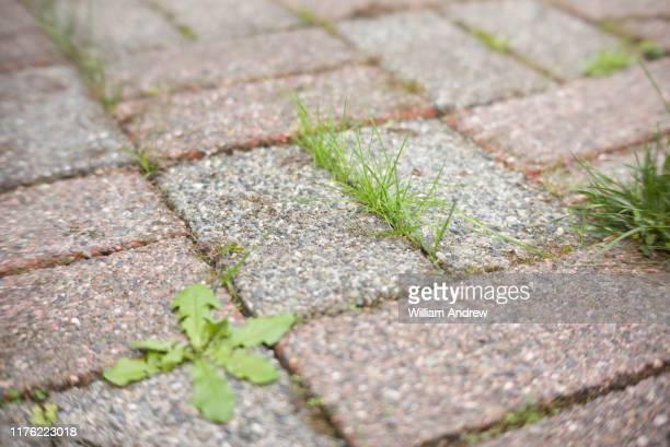 grass growing through cracks in patio - paving stone stock pictures, royalty-free photos & images
