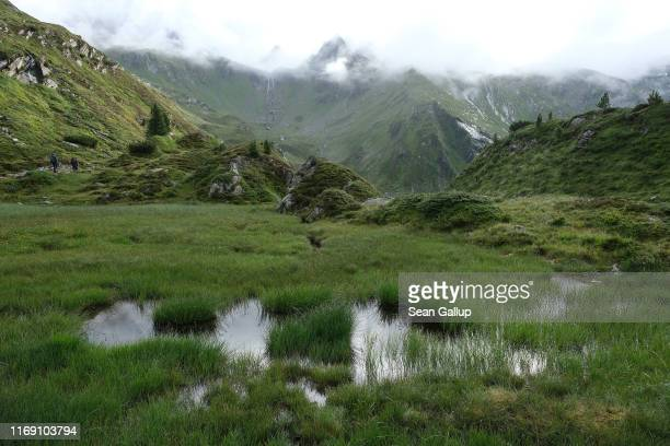 Grass grows in a marsh in an area of retreating glaciers along the Mörchenscharte trail in the Zillertal Alps on August 16, 2019 near Ginzling,...